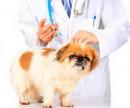 Укол собаке (Инъекция внутривенная) цена