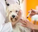 Укол собаке (инъекция внутримышечная) цена