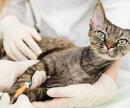 Капельница для кошек (внутривенная капельная инфузия: до 1 часа) цена