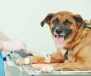 Капельница для собак (внутривенная капельная инфузия: до 1 часа) цена