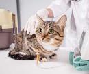 Капельница для кошек (подкожная капельная инфузия) цена
