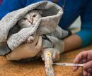 Катетер для кошек (установка в периферическую вену) цена