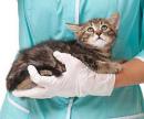 Катетер для кошек (катетеризация мочевого пузыря) цена