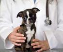 Новокаиновая блокада для собаки, цена