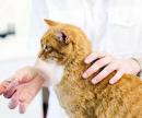 Как дать кошке таблетку (пероральное введение лекарственных средств) цена