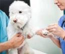 Анализ крови собаки (Экспресс – анализ крови на сахар глюкометром) цена