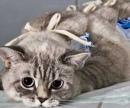 Обработка швов кошке цена