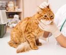 Кошка ушной клещ (Обработка от эктопаразитов) цена