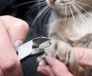 Стрижка когтей у кошек цена