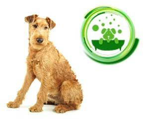 Red-Irish-Terrier-dog.jpg