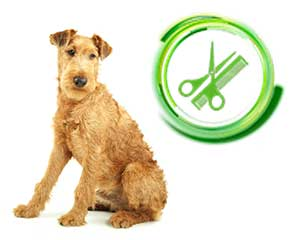 Red-Irish-Terrier-dog.jpg