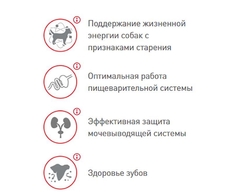 Royal Canin British - Животные - OLX. ua
