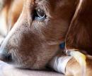 Катетер для собак (установка в периферическую вену) цена