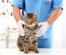 Седация (обездвиживание кошки) цена