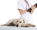 Седация (обездвиживание собаки) цена