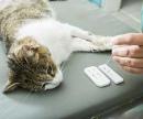 Анализ крови кошке (Экспресс – анализ крови на сахар глюкометром) цена