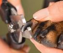 Стрижка когтей у собак цена
